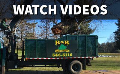Watch Videos of B&B Tree Service, Inc. in South Jersey