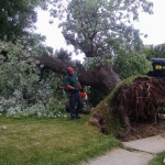 bnb-tree-cleanup-stratford-nj