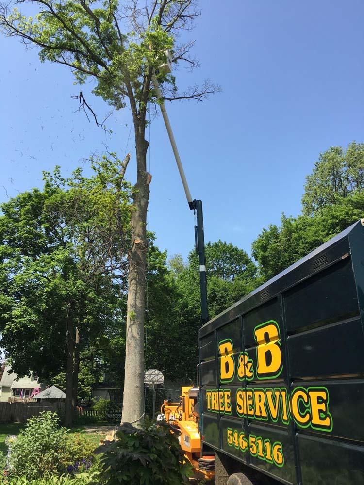 B&B Tree Service extended length truck at job