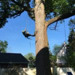 B&B Tree Service Climbing in South Jersey