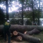 cutting-down-huge-tree-nj-1