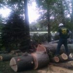 cutting-down-huge-tree-nj