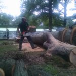 cutting-down-huge-tree-nj-2