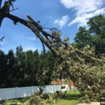 major-tree-limb-storm-damage-1