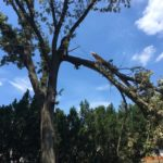 major-tree-limb-storm-damage