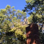 pruning-broken-tree-limbs-south-jersey-1