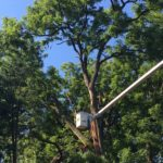 pruning-broken-tree-limbs-south-jersey