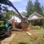 removing-tree-on-fence-nj-5