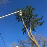 Split Pine Tree Takedown in NJ