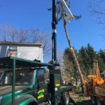 Split Pine Tree Takedown in South Jersey