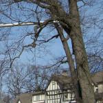 tree-service-dead-wood