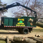 tree-service-log-removal