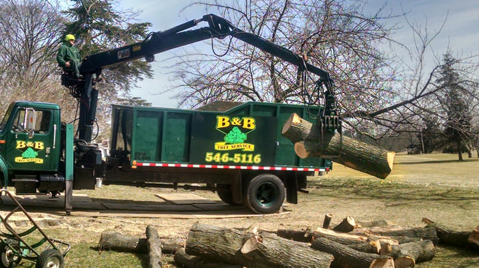Tree Removal - Hauling Away Logs from Tree Service Job in South Jersey