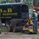 tree-service-massive-limbs