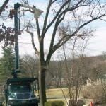 tree-service-pruning