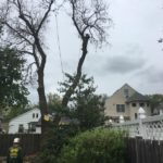 Cutting Down a Tree in South Jersey