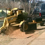 tree-service-stump-grinding-2