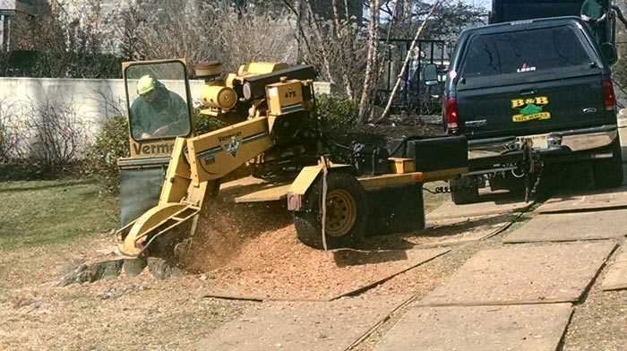 Stump Grinding in Camden County, NJ