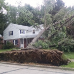 uprooted-tree-south-jersey