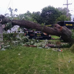 uprooted-tree-south-jersey-2